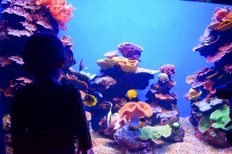 L'Aquarium de Palma